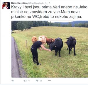 slechtova byci kravy